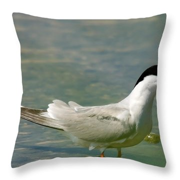 Common Tern Portrait Throw Pillow by Cliff Norton