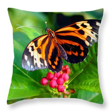 Common Tiger Glassywing Butterfly Throw Pillow by Amy McDaniel
