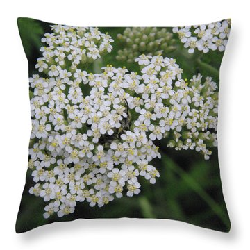 Common Yarrow Closeup Throw Pillow by Robyn Stacey