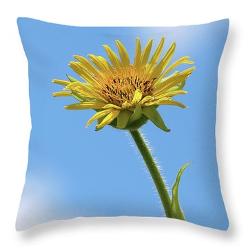 Compass Plant Throw Pillow