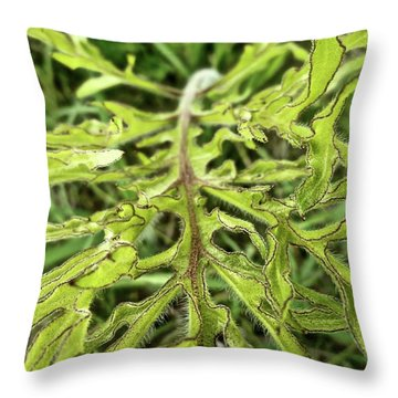 Compass Plant Throw Pillow by Tim Good