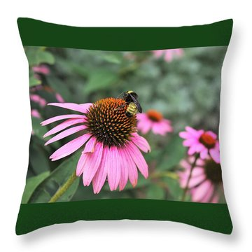 Throw Pillow featuring the photograph Cone Flowers And Bee by Sheila Brown