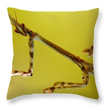 Throw Pillow featuring the photograph Cone Head Mantis by Richard Patmore