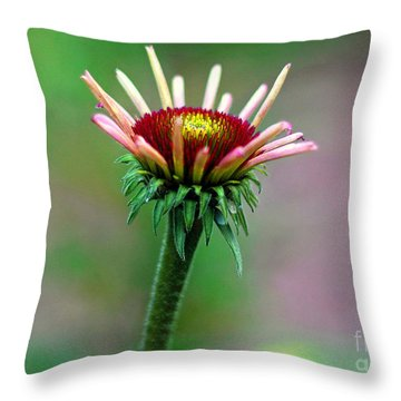 Coneflower Bloom Throw Pillow