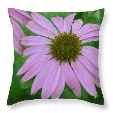 Coneflower Throw Pillow