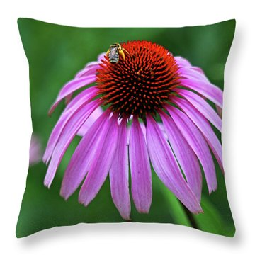 Throw Pillow featuring the photograph Coneflower by Judy Vincent