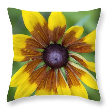 Coneflower - New England Wild Flower Throw Pillow by Erin Paul Donovan
