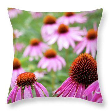 Throw Pillow featuring the photograph Coneflowers by David Chandler