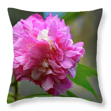 Throw Pillow featuring the photograph Confederate Rose by Jimmie Bartlett
