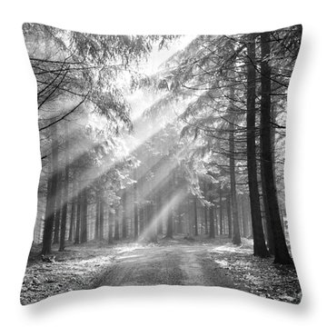 Conifer Forest In Fog Throw Pillow by Michal Boubin