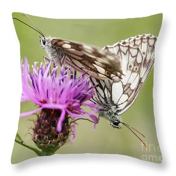 Contact - Butterflies On The Bloom Throw Pillow by Michal Boubin