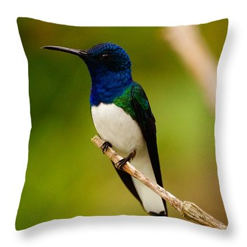 Throw Pillow featuring the photograph Contemplation by Blair Wainman