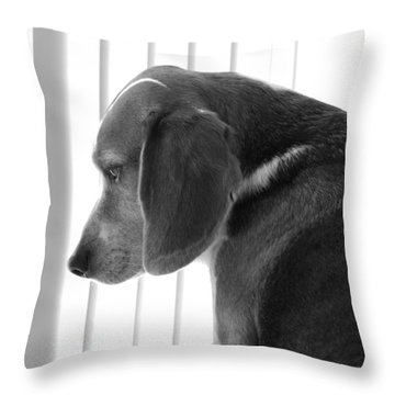 Contemplative Beagle Throw Pillow