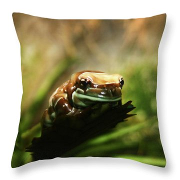 Throw Pillow featuring the photograph Content by Anthony Jones