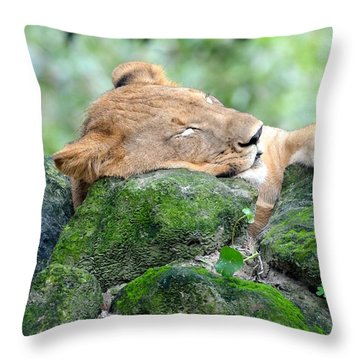 Contented Sleeping Lion Throw Pillow