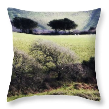 Contrast Of Trees Throw Pillow