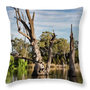 Throw Pillow featuring the photograph Contrasted by Douglas Barnard