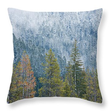Contrasting Pines Throw Pillow