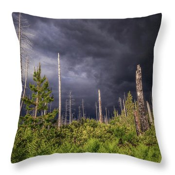 Throw Pillow featuring the photograph Contrasts by Cat Connor