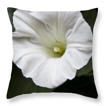 Convolvulus Throw Pillow by Svetlana Sewell