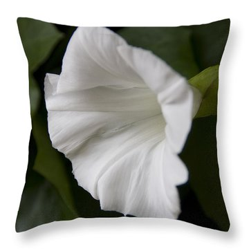Convolvulus Weed Throw Pillow by Svetlana Sewell