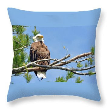 Throw Pillow featuring the photograph Cool Breeze by Glenn Gordon
