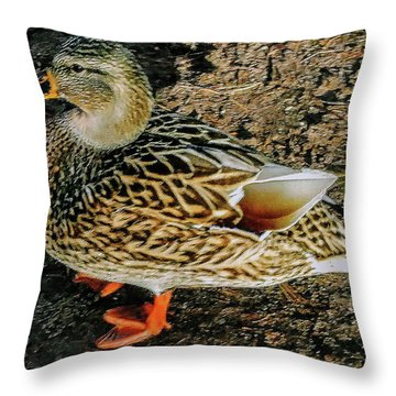 Throw Pillow featuring the photograph Cool Duck by Roger Bester
