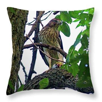 Cooper Hawk Throw Pillow by Sue Stefanowicz