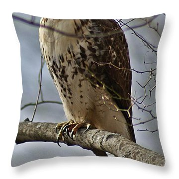 Cooper's Hawk 2 Throw Pillow by Joe Faherty