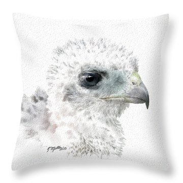 Coopers Hawk Chick Throw Pillow