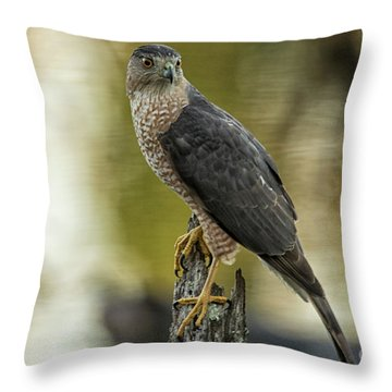 Cooper's Hawk Throw Pillow