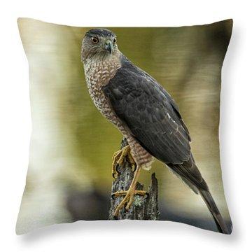 Cooper's Hawk Throw Pillow by Geraldine DeBoer