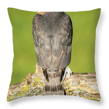 Cooper's Hawk In The Backyard Throw Pillow