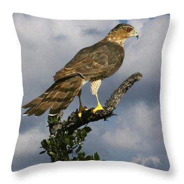 Cooper's Hawk On Watch Throw Pillow