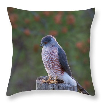 Coopers Hawk Perched Throw Pillow