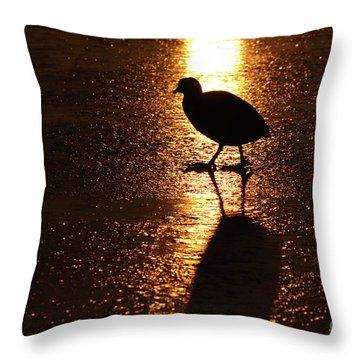 Coot Walks On Golden Ice  Throw Pillow