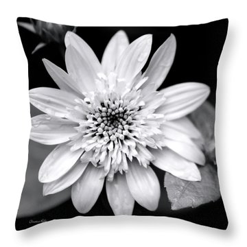 Throw Pillow featuring the photograph Coreopsis Flower Black And White by Christina Rollo
