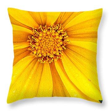 Coreopsis2 Throw Pillow by Susan Crossman Buscho