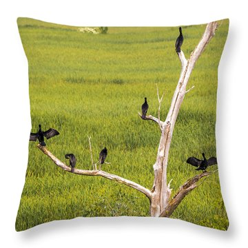 Throw Pillow featuring the photograph Cormorant At Horicon Marsh by Ricky L Jones