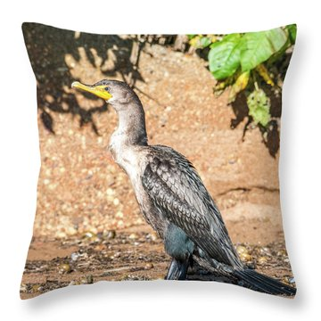 Throw Pillow featuring the photograph Cormorant On Shore by Paul Freidlund