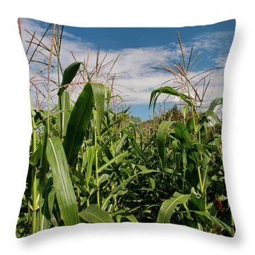 Throw Pillow featuring the photograph Corn 2287 by Guy Whiteley