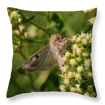 Corn Earworm Throw Pillows