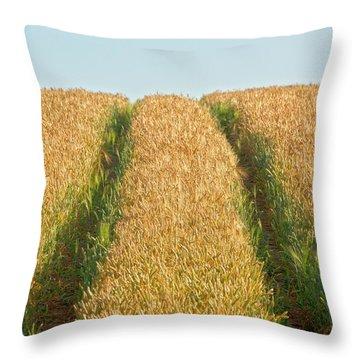 Corn Field Throw Pillow by Heiko Koehrer-Wagner