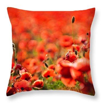 Corn Poppies Throw Pillow by Meirion Matthias