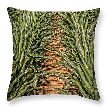 Corn Row Throw Pillow