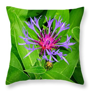 Centaurea Montana Throw Pillow