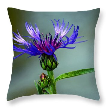 Throw Pillow featuring the photograph Cornflower by Rodney Campbell