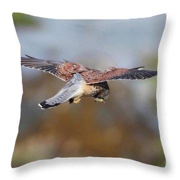 Throw Pillow featuring the photograph Cornish Kestrel Hunting by Nicholas Burningham