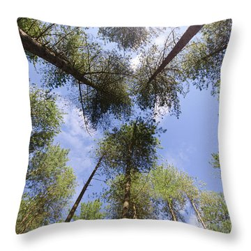 Corsican Pine Canopy Throw Pillow by Steev Stamford