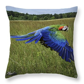 Cosmo In Flight Throw Pillow by Melissa Messick